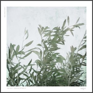 The Wind no.01 : Olive Leaves